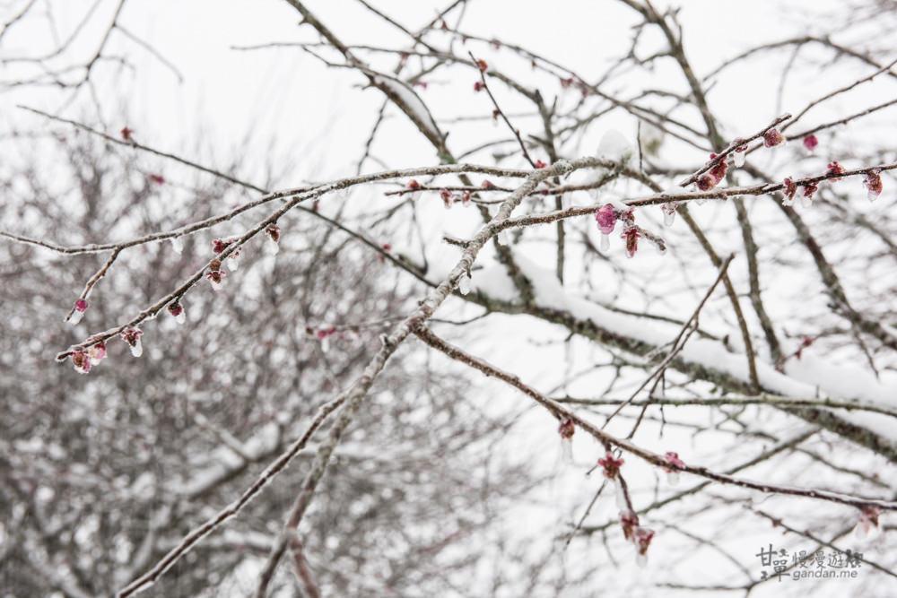lalamountain-snow-147