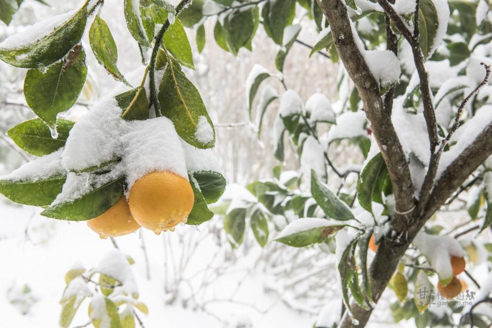 lalamountain-snow-152