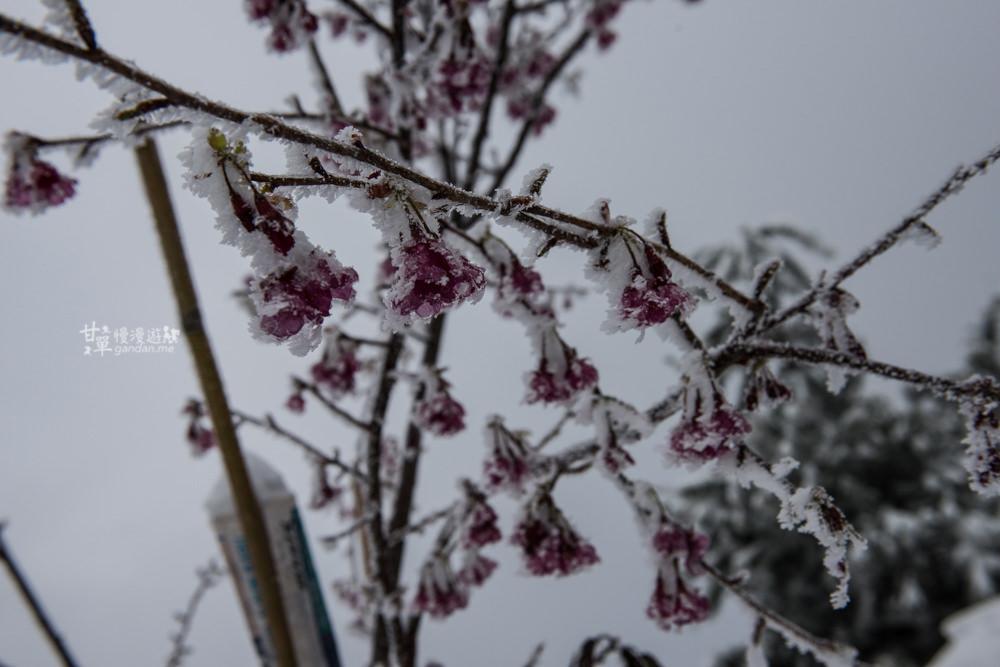 lalamountain-snow-279