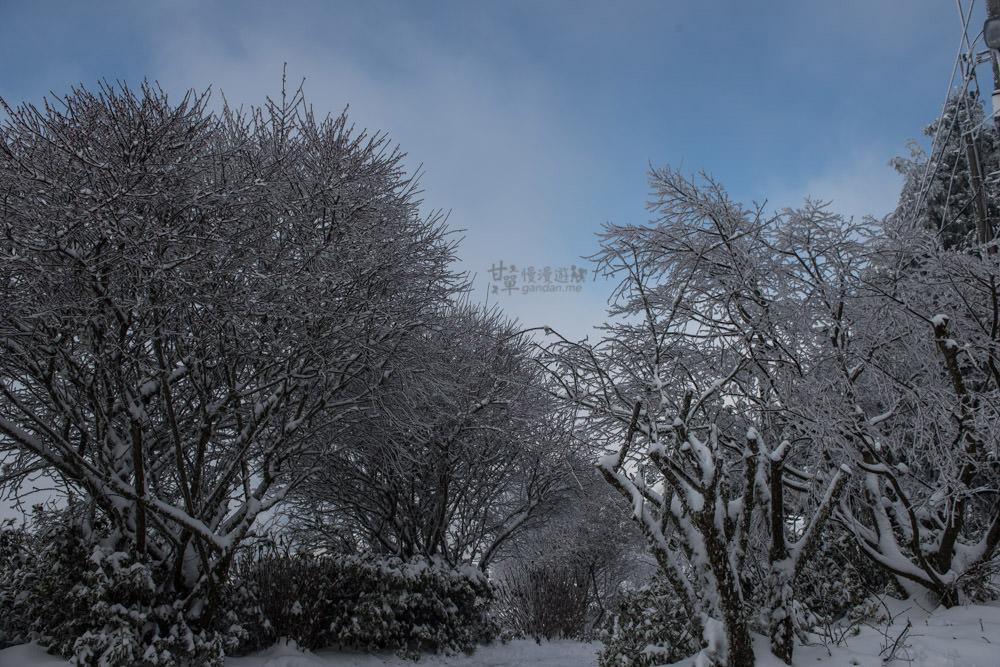 lalamountain-snow-289