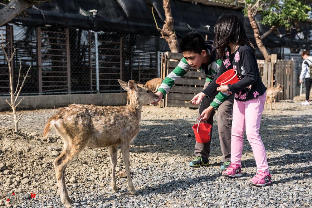 Deer-19