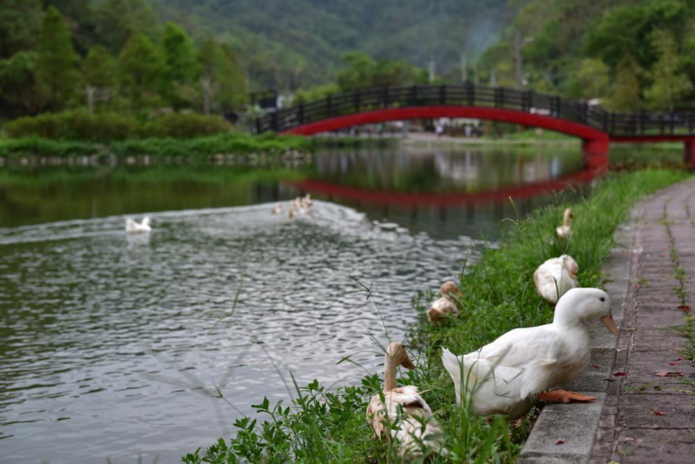 WangLongBei-19