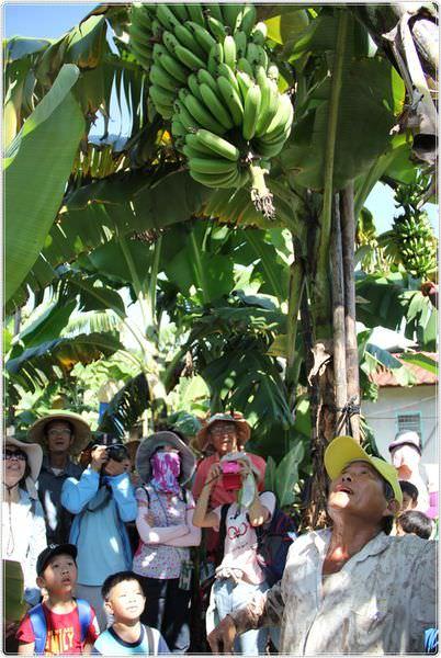bananaIMG_4217.JPG