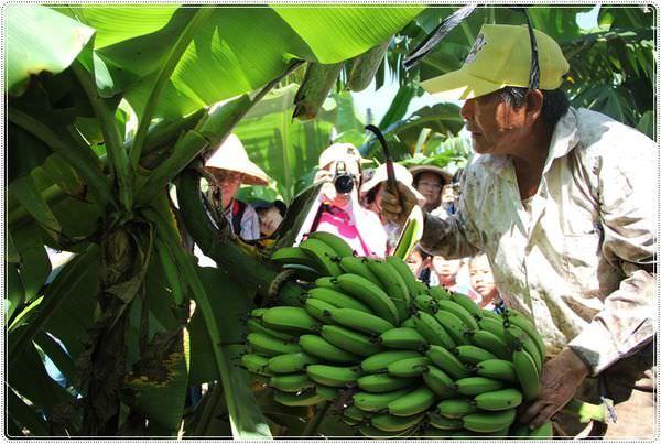 bananaIMG_4226.JPG
