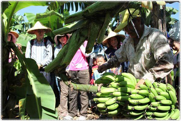 bananaIMG_4239.JPG