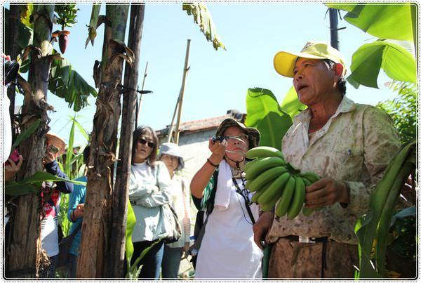bananaIMG_4250.JPG